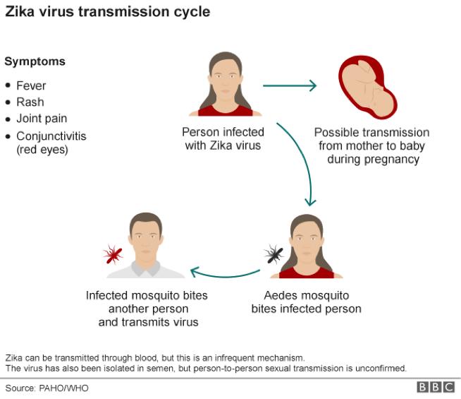 zika virus houston texas